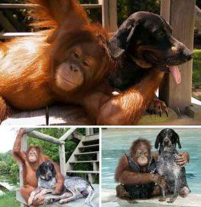 chimpanddog