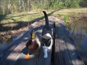 duckandcat