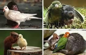 interspecies